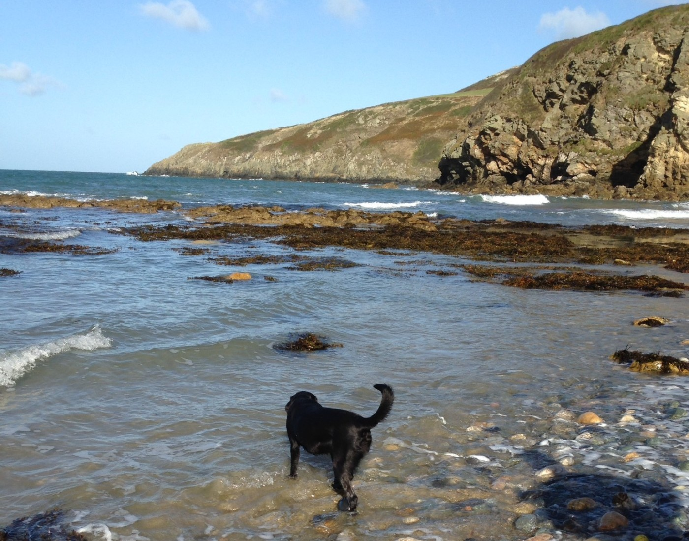 Anglesey dog friendly