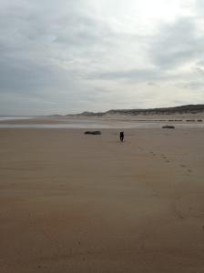 Northumbria dog beaches